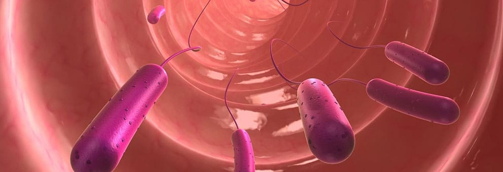 Flora-batterica-intestinale