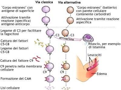 immunitario