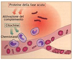 immunitario2