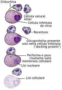 immunitario4